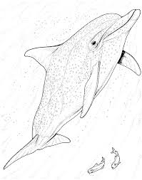 Small Picture Bottlenose Dolphin Coloring Pages Free Dolphin Coloring Pages