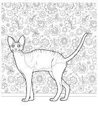 Gatticats 22 Disegni Da Colorare Per Adulti E Ragazzi