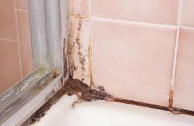get rid of black mold and mildew in shower grout orange mold mold in shower grout