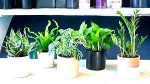 best indoor office plants. Low Maintenance Office Plants Best Indoor Good  Modern Mesmerizing Full . T