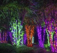 halloween lighting. create an electric forest with halloween light wrapped trees lighting