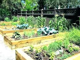 urban vegetable garden ideas medium size of organic small home design furniture gardening for beginners