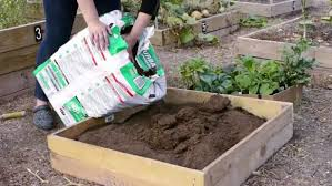 Small Picture How To Start A Vegetable Garden From Scratch to start a vegetable