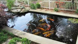 Pond Design Essential Features Of Koi Pond Design Indoor And Outdoor Design