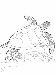 Small Picture Sea Turtle Loggerhead Sea Turtle Coloring Page wine and