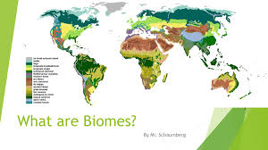 What Are Biomes What Are Biomes