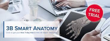 Medical Simulators Anatomical Models And Charts Therapy