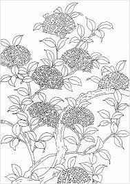 Fiori Da Disegnare Facili 50 Disegni Da Colorare E Stampare Per