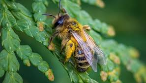 Bumblebees Vs Honeybees Whats The Difference And Why