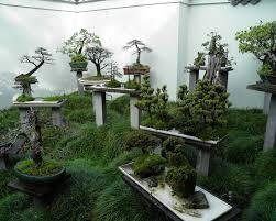 bonsai gardens. bonsai garden in china by paul thompson gardens empire
