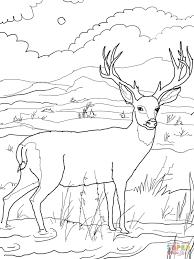 Coloriage Cerf Queue Noire Coloriages Imprimer Gratuits