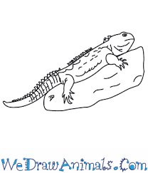 Small Picture How to Draw a Tuatara
