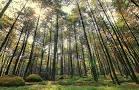 Hutan Pinus Gunung Pancar Bogor - Alamat, Fasilitas & Harga Tiket