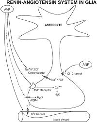 1997 Gmc 3500  Wiring Diagrams
