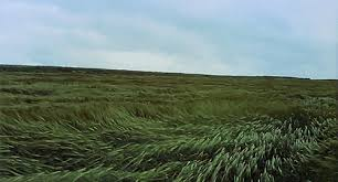 green grass field animated. Poetryof-motion: \u201cDo You Not Then Hear This Horrible Scream All Around That People Usually Call Silence?\u201d Green Grass Field Animated N