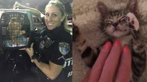 Animal Cop Compassionate Cop Rescues 63 Adorable Stray Cats