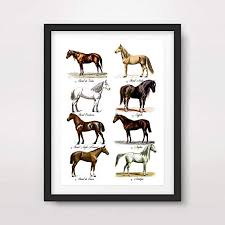 Amazon Com Horse Breed Chart Art Print Poster Vintage