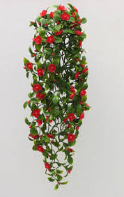 279 Best Petals Leaves Bouquets Images On Pinterest  People Climbing Plants Indoor