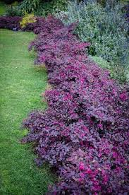 year round flowers for landscaping popular flower garden plans flower garden plans for year round color