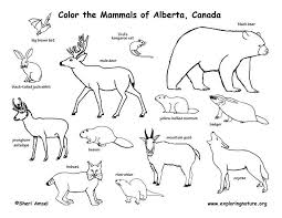 1553 biomes colouring pages jpg 792 612
