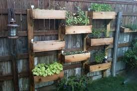 a shared herb garden along a fence