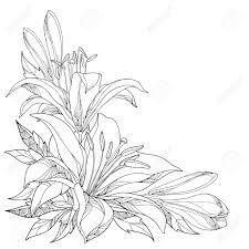 華やかな白いユリの花芽黒白で隔離の葉とベクトルの花束角成分はユリ夏デザインと塗り絵の輪郭のスタ