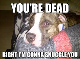 you're dead right i'm gonna snuggle you - Vicious Pit Meme - quickmeme via Relatably.com