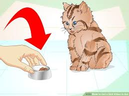 image led get a sick kitten to eat step 1