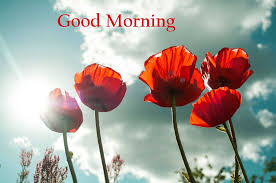 157 good morning flowers images photos pics hd here