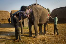 photo essay s elephant beauty contest thinkbrigade photo essay s elephant beauty contest