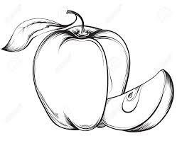 apple fruit black and white. apple. vector hand drawn fruit. vintage sketch style illustration. stock - 40460578 apple fruit black and white e