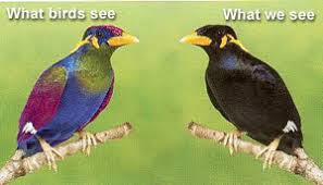 Archive Birds Comparative Physiology Of Vision