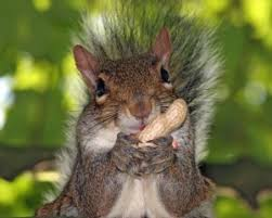 squirrel for kids. Squirrel Eating Nuts Image Science For Kids All About Squirrels Inside