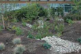 Small Picture Rain Garden Designs Woodbrook Native Plant Nursery