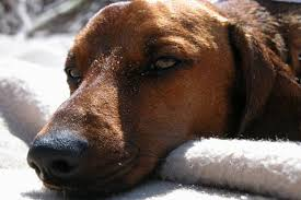 How to Heal Black Itchy Skin on a Dog | Cuteness