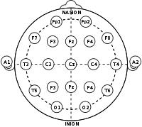 10 20 System Eeg Wikipedia