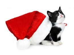 Christmas Kitten Wallpaper Cats Animals (46 Wallpapers) – HD ...