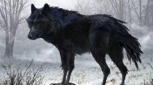 black wolf wallpaper 1920x1080. Interesting Black Wallpapers For U003e Black Wolf Wallpaper Hd To 1920x1080 Cave