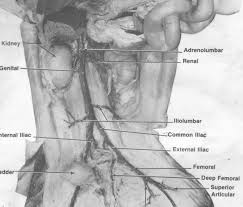 circulatory system essay parts of transportation circulatory system essay parts of transportation circulatory system essay