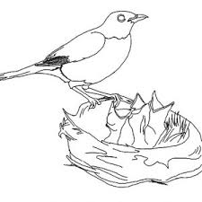 Small Picture A Bird in the Bird Nest Coloring Pages Best Place to Color