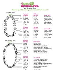 Canine Tooth Eruption Chart Kids Dentistree Tooth Eruption Chart Tooth Extraction