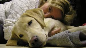 Canine Lymphoma Symptoms Dog Cancer Signs 8 Early Symptoms Of Canine Cancer
