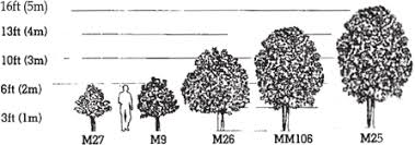 Apple Tree Guide Tree Type And Rootstocks Chris Bowers Sons