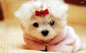 Girly Puppy Wallpapers - Top Free Girly ...