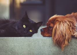 Best Pet Insurance Companies For 2019 According To Actual