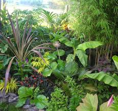 A beautiful tropical plant combination. The cordyline is 'electric Star'.