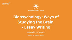 biopsychology ways of studying the brain essay writing  biopsychology ways of studying the brain essay writing