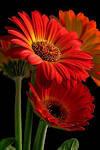 Best 20  Beautiful Flowers Photos ideas on Pinterest   Beautiful ...