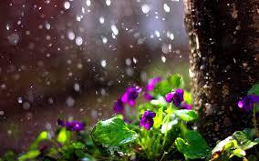 10++ Nature Rain Desktop Wallpaper Hd ...