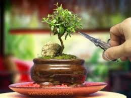 office bonsai. indoor beginneru0027s bonsai mini aromatic u0026amp herbal tree for home or office s